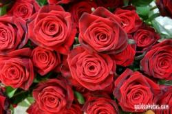 rote_rosen