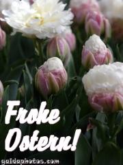 oster-karte-tulpe-weiss-12