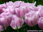 oster-karte-tulpen-06
