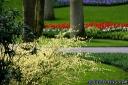 witzige-sprueche-ostern-fruehlingsblumen-12